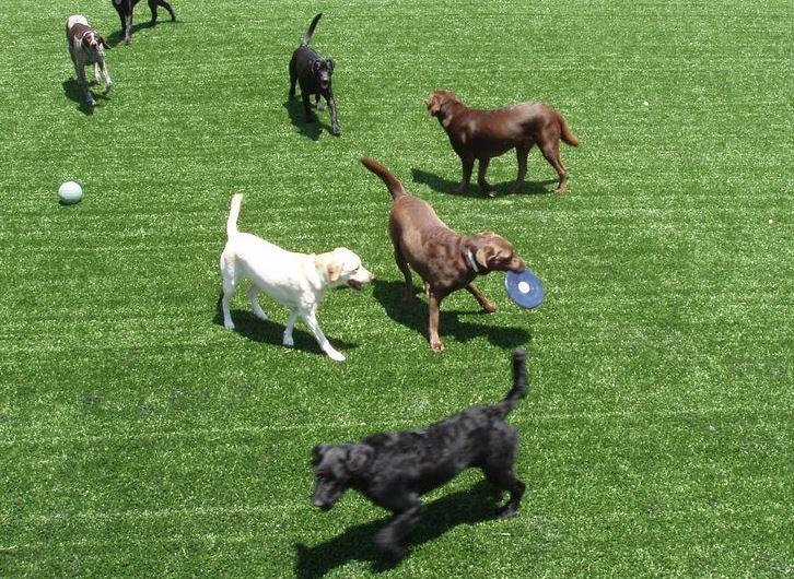artificial grass for pets gilbert az