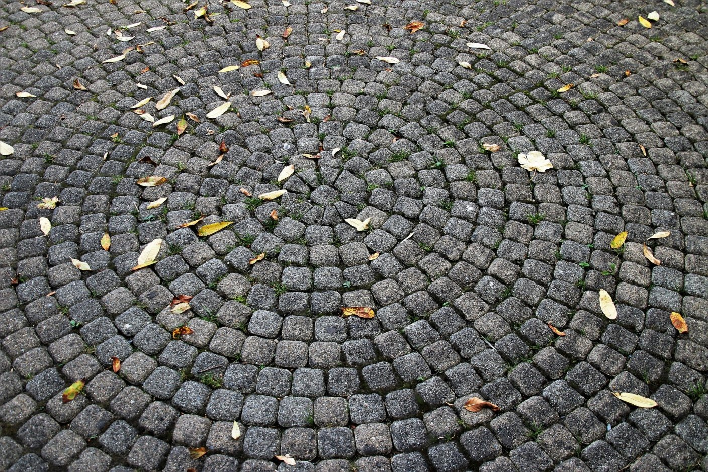 Maintaining your pavers